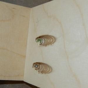 Schrauben in Taschenlöchern